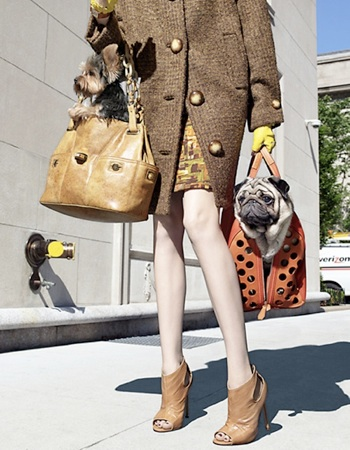 Pug Loving | Fashionable Pugs